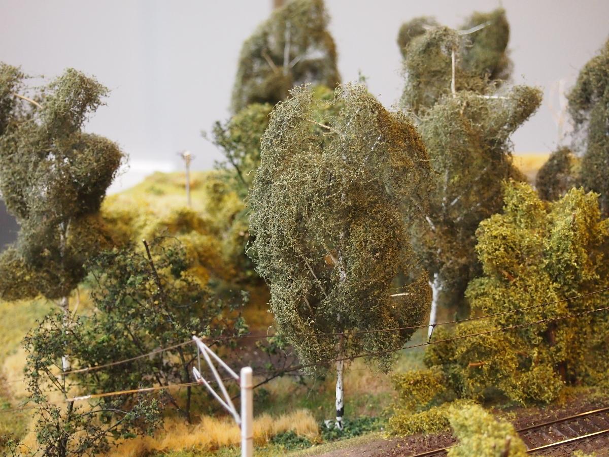 birch swamp 2