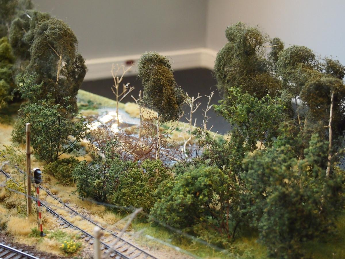 birch swamp