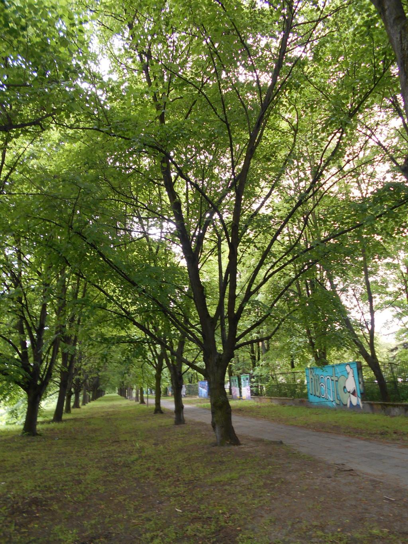 linden tree trunk arrangement 2