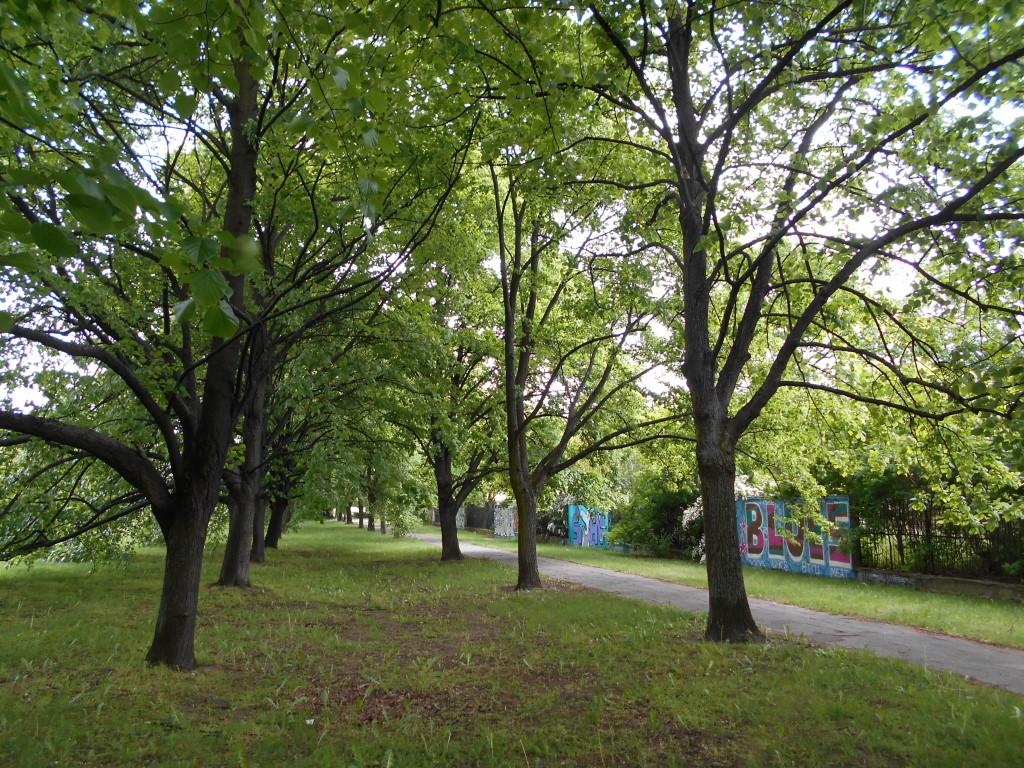linden tree trunk arrangement 3