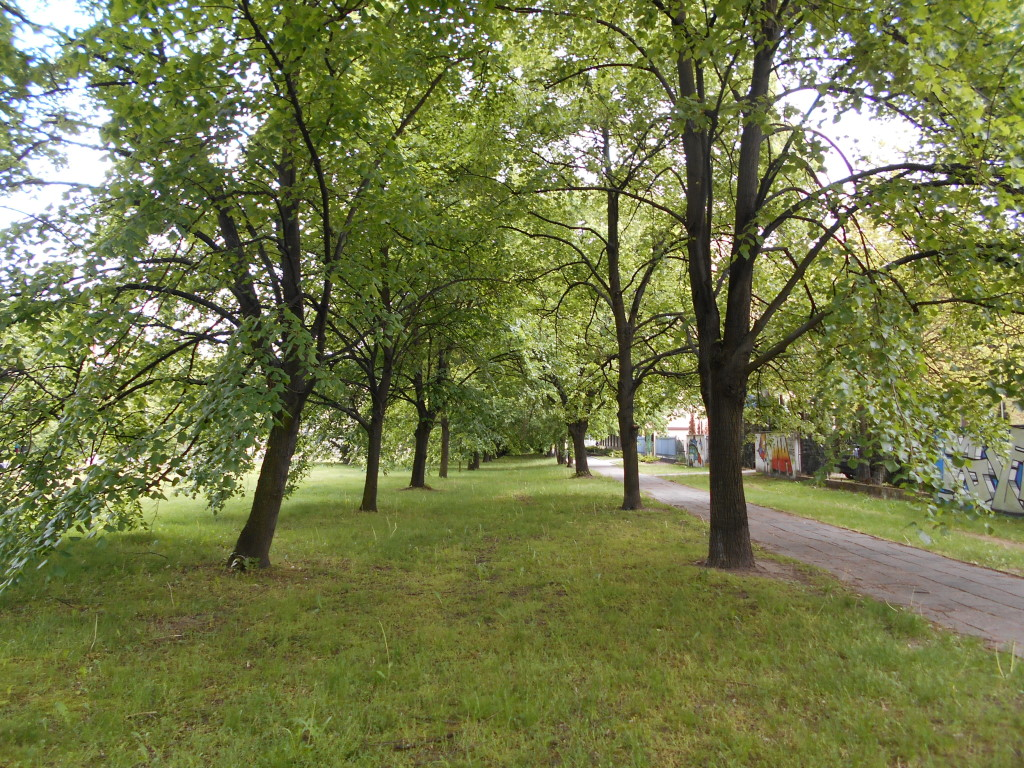 linden tree trunk arrangement 5