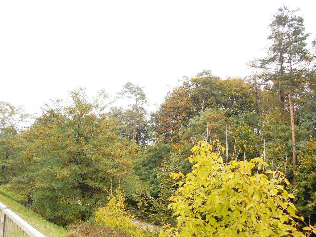 kolo forest 1