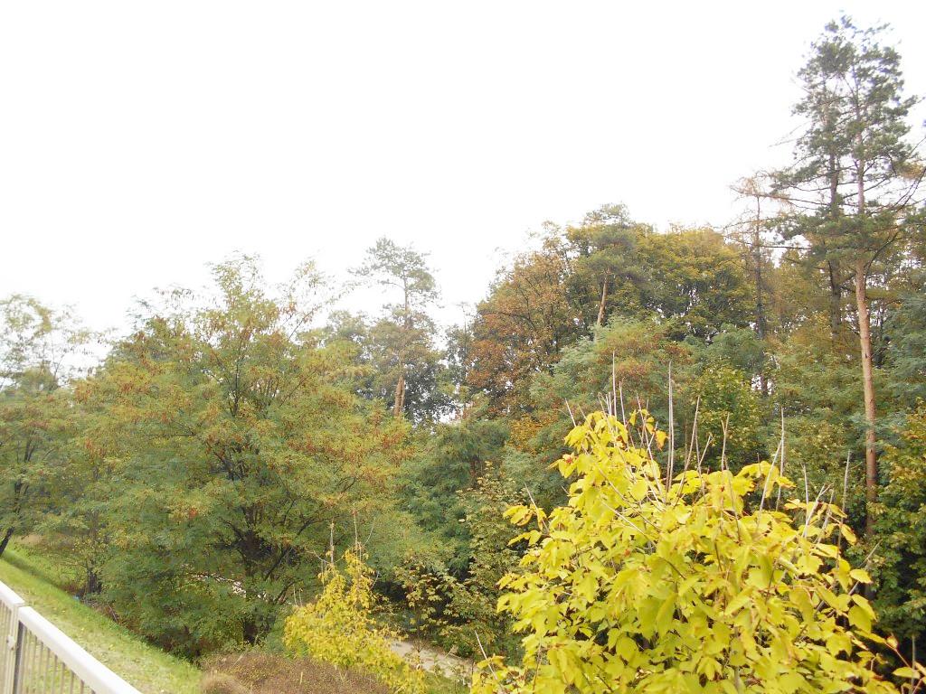 kolo forest 2