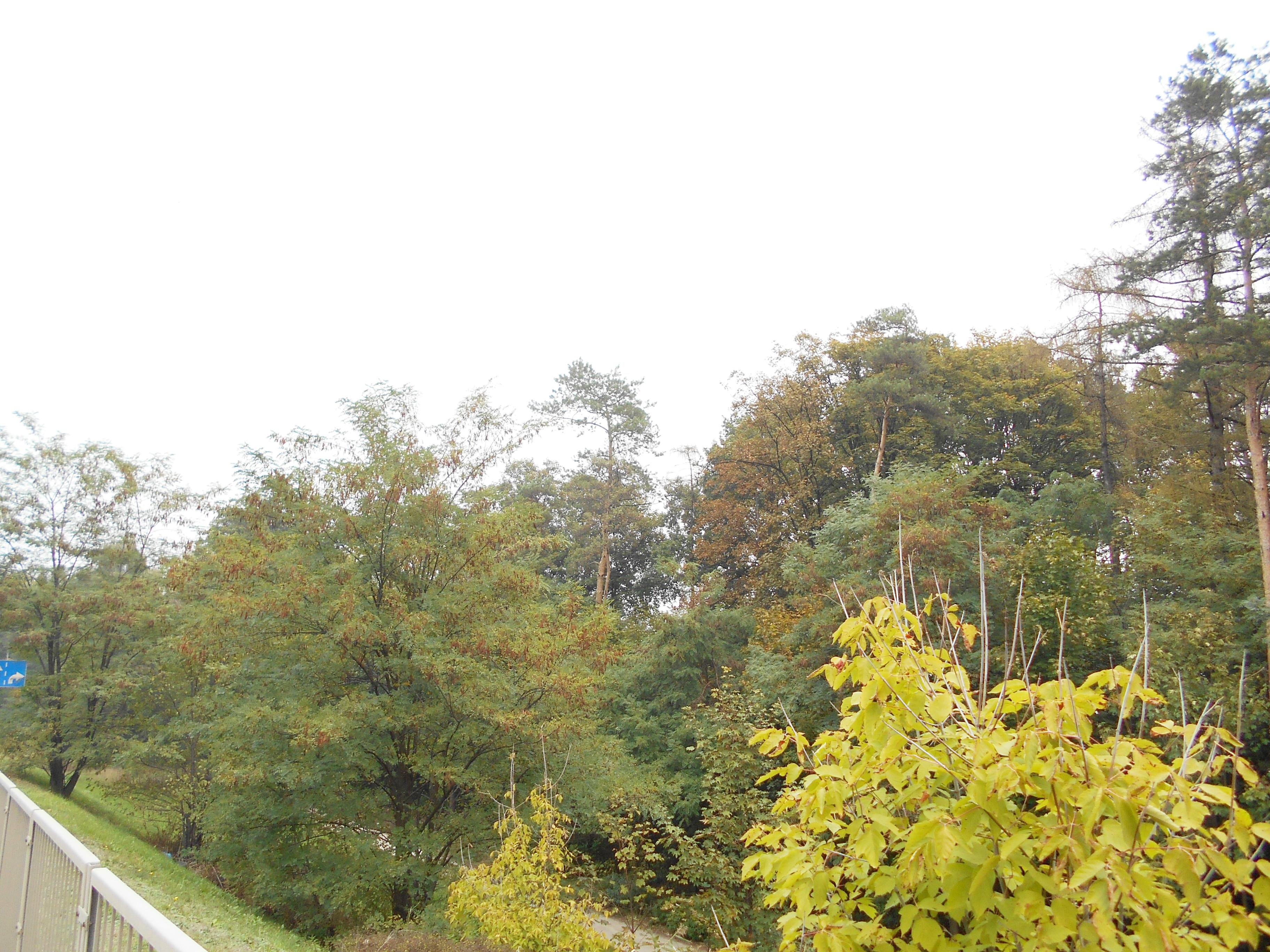 kolo forest 3