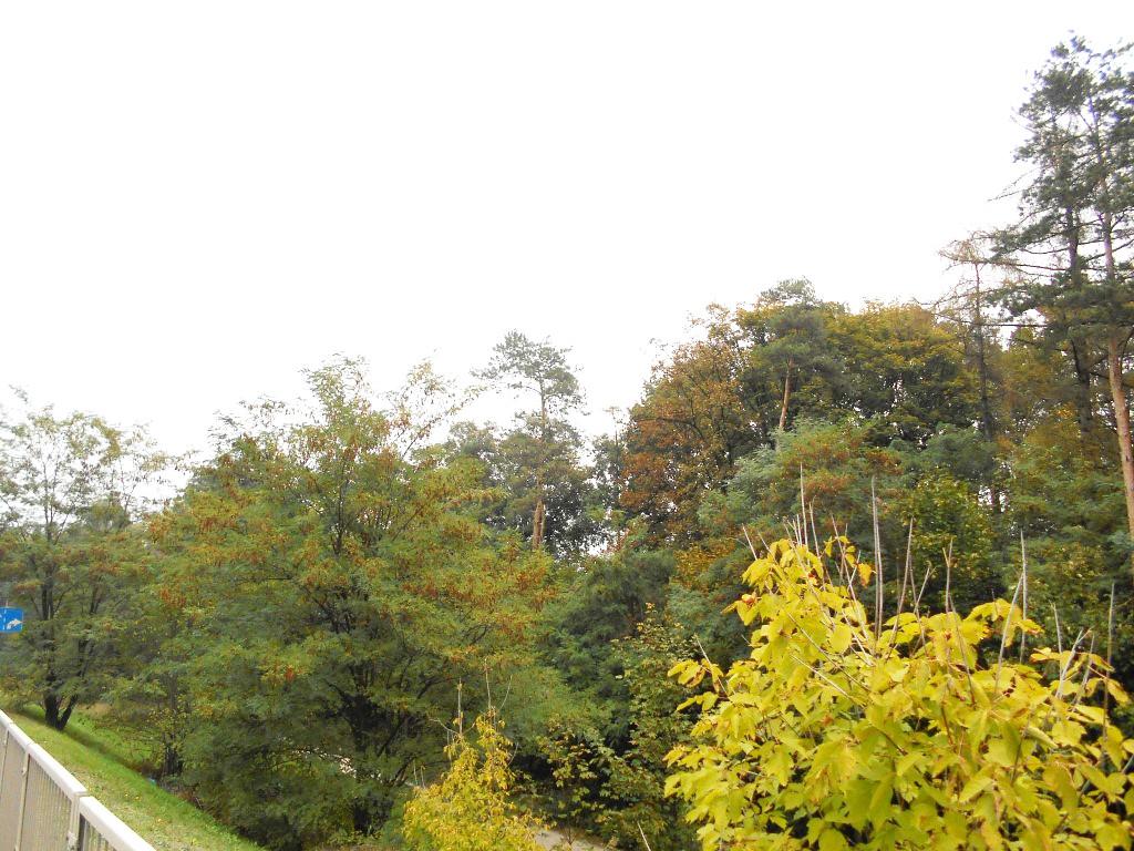 kolo forest 5