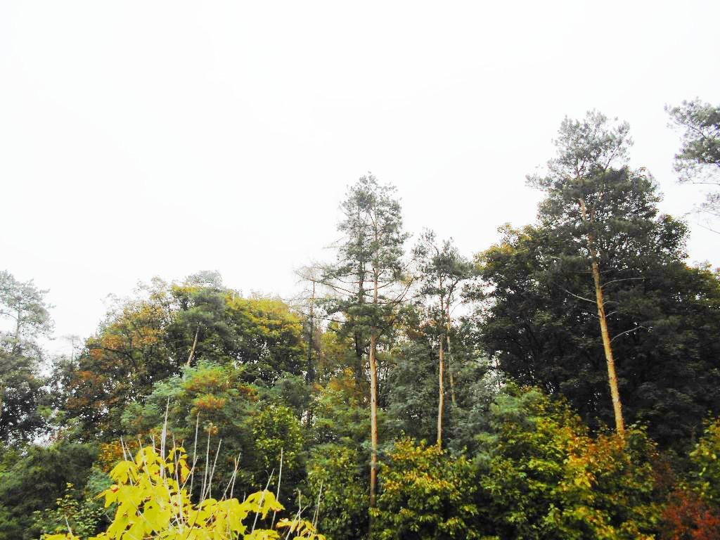 kolo forest 6