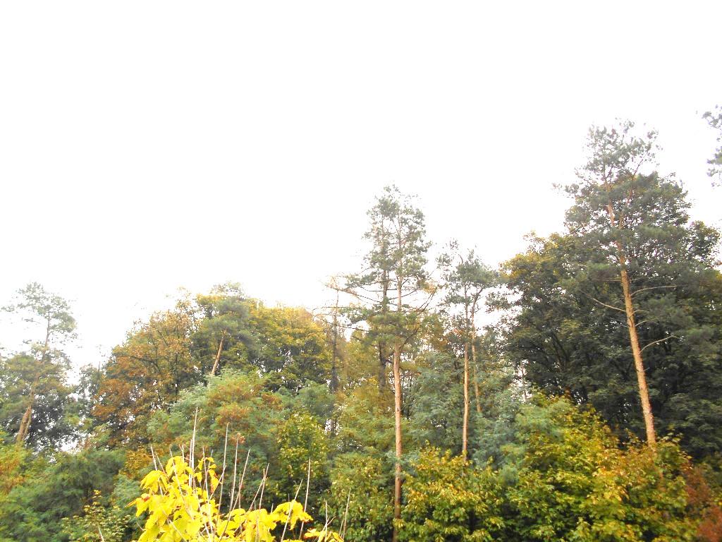 kolo forest 7