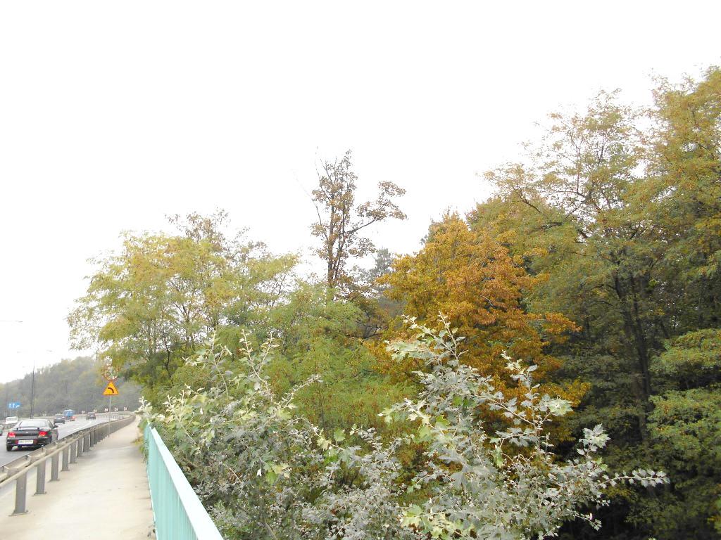 kolo forest 9